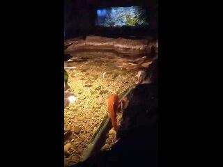 РыбыОкеанариум