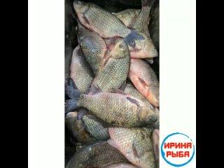 #ИринаРыбаРечная❗😍ТОЛЬКО У НАС В АЛЬМЕТЬЕВСКЕ*❗Свежее поступление исамый большой ассортимент рыбы, морепродуктов и икры, бол