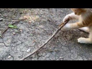 Andrey Bliznyuktan video