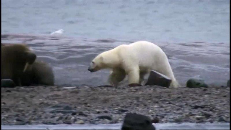 Планета Земля BBC 6 я серия Ледяные миры Ice Worlds