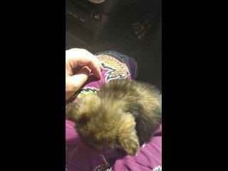 Собака Алабака,по имени Бабака и Котаны Братаны. kullanıcısından video