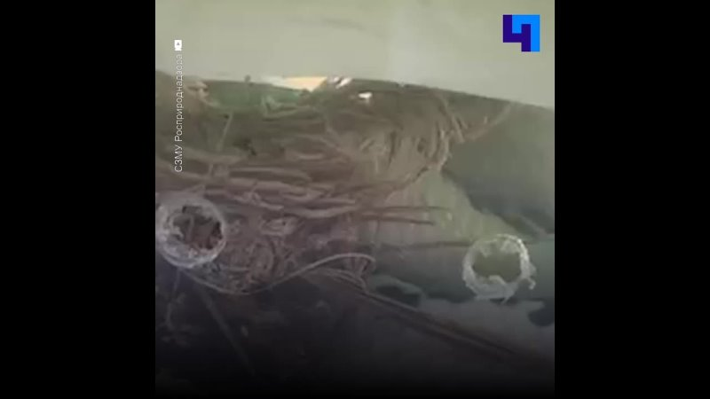 У жителя Петербурга изъяли сиамскую кобру
