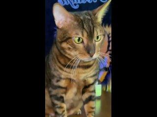 реклама кошачьего корма