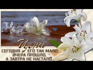 Video by Svetlana Pikalova