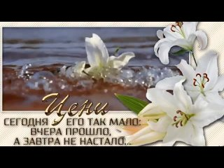 Svetlana Pikalovatan video