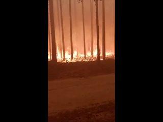 Лесной пожар в районе деревни Кудама 2021 Карелия