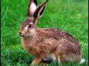 Охота На Зайца с Пневматикой