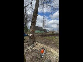 Спил дерева с использование клиньев