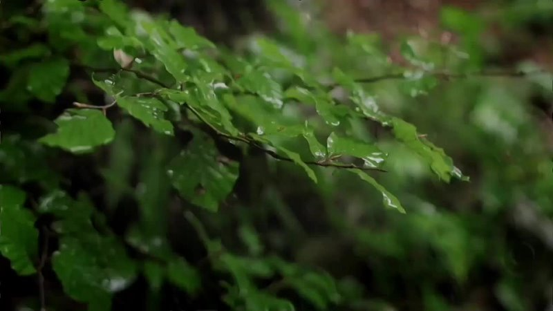МАРАТ НОВА Зацелованная дождями 1080p mp4