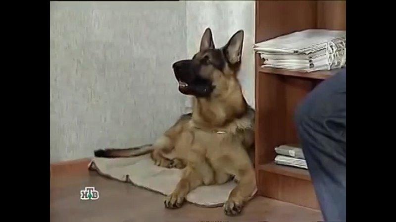 Возвращение Мухтара 5 сезон 47 серия Старая пластинка