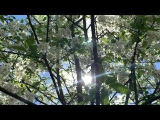 Видео от Даниловское телевидение