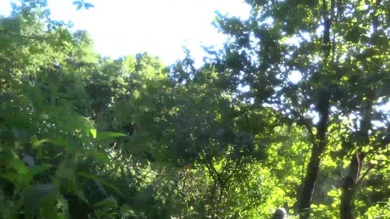 Видео от Александра Матвеева