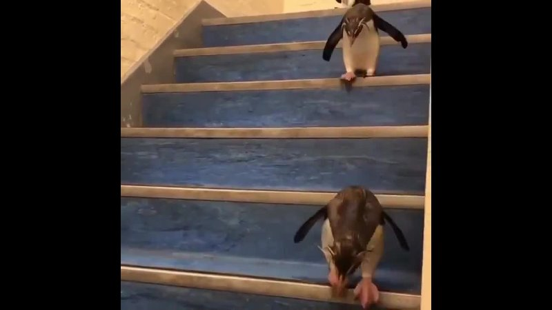 Just penguins going down the ladder