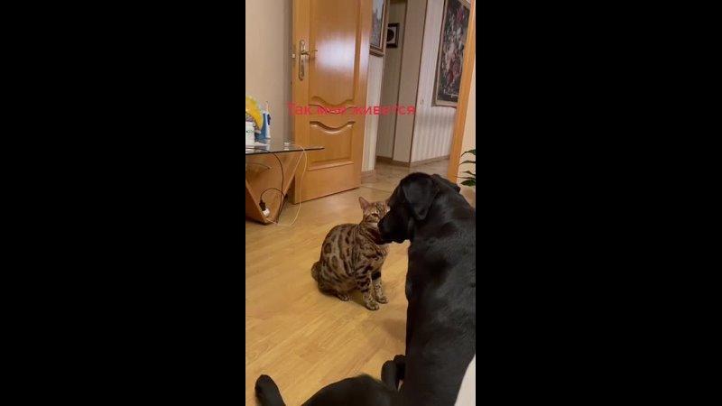 Когда задира в семье пёс