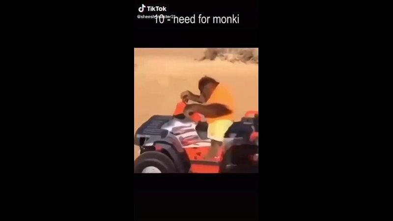 Top 10 monki vids