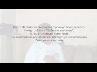 приют Котофей Котофеич (Алтайский край) благодарность фонду ЗАБЫТЫЕ ЖИВОТНЫЕ