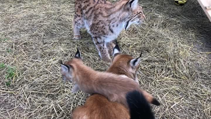 Видео от Челябинский Зоопарк