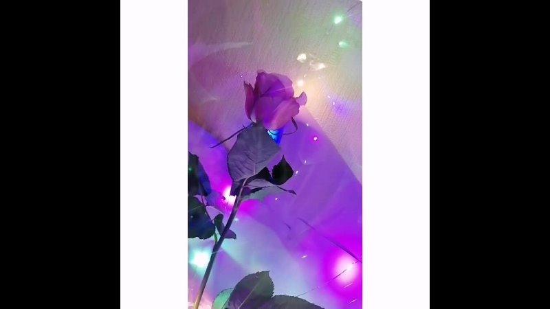 Роза в светящемся шаре 💜