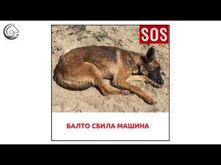 """Видео от Фонд помощи бездомным животным """"ПОДАРИ ЖИЗНЬ"""""""