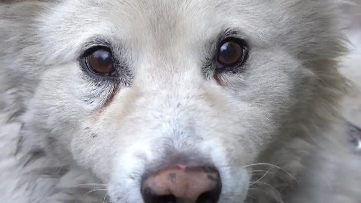 Пес выжил после мощного взрыва на АЗС