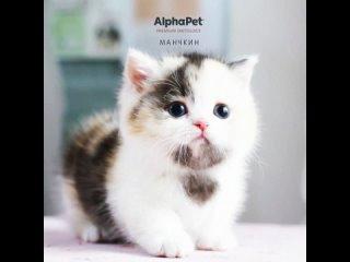 Видео от AlphαPet®