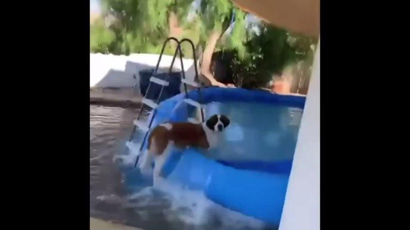 Собачка тоже хочет купаться)