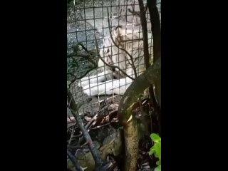 Видео от Юлии Смагиной