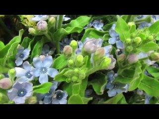 Video by Цветы у Вики