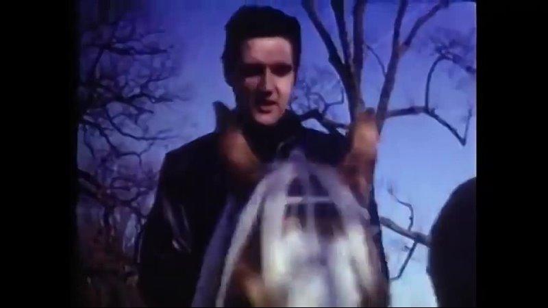 Великолепные кадры конной прогулки Элвиса Грейсленд 1968 год