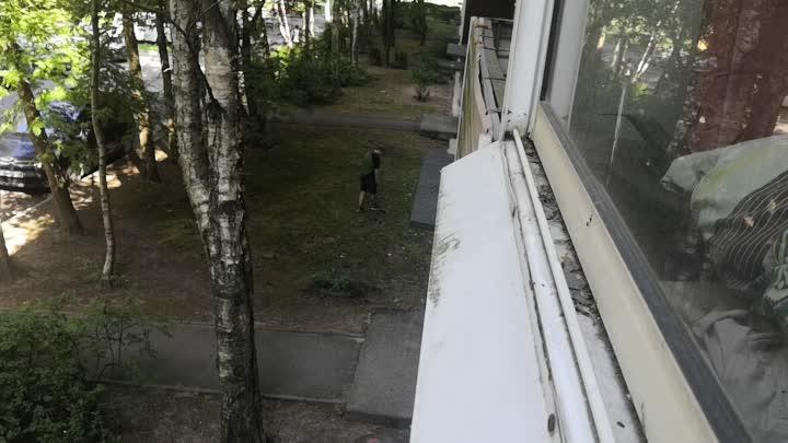 В каждом дворе свои герои. Во дворе на Антонова-Овсеенко, они такие. Ищут малейший фантик в кустах и...