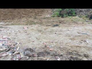 Видео от Камчатка: свежие новости и происшествия
