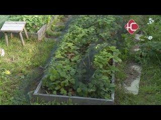Огород с нуля