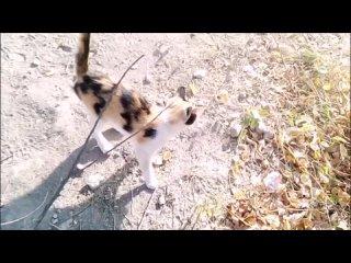 Потомство кота Василия