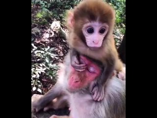 Video by Приматы