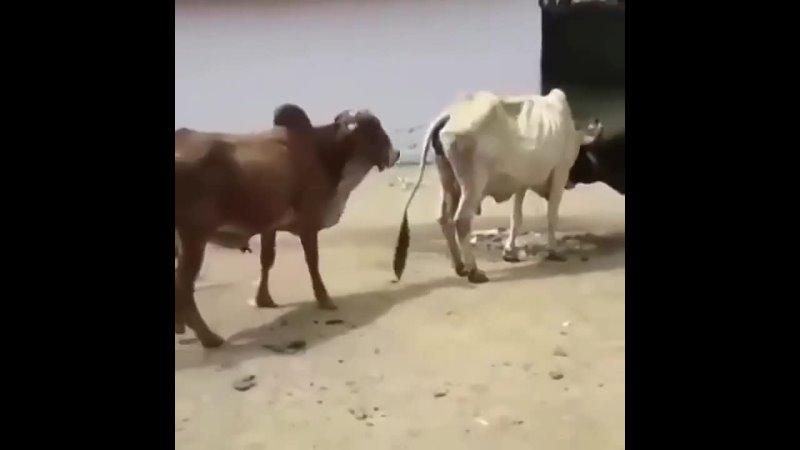 Видео от Опасная Земля 2 0