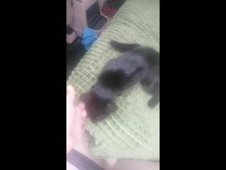 Видео от Светланы Базылевой