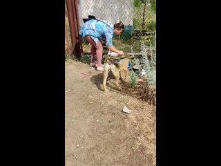 Video by Фонд помощи бездомным животным г.Нижнекамск
