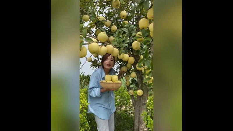 А ведь в Эдеме были очень вкусные яблоки Нигде больше таких не смог найти