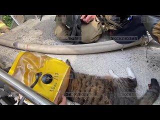 В пожаре в квартире на Светлановском проспекте пострадал кот