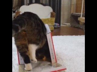 Кот всегда найдет проблему
