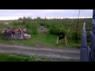 Видео от Александра Ананьева