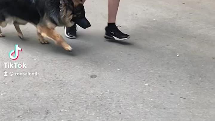 Видео от Стрижка кошек и собак в Тольятти
