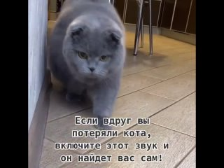 Мы не знаем перевод, но это звучит замурчательно на любых языках мира)