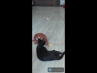 Видео от Кошкам нужна ваша помощь! Спб