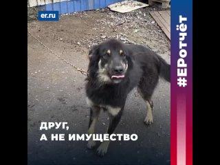 Защита домашних животных