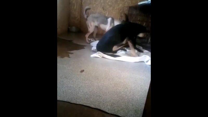 Видео от Защита животных в Петропавловске РК