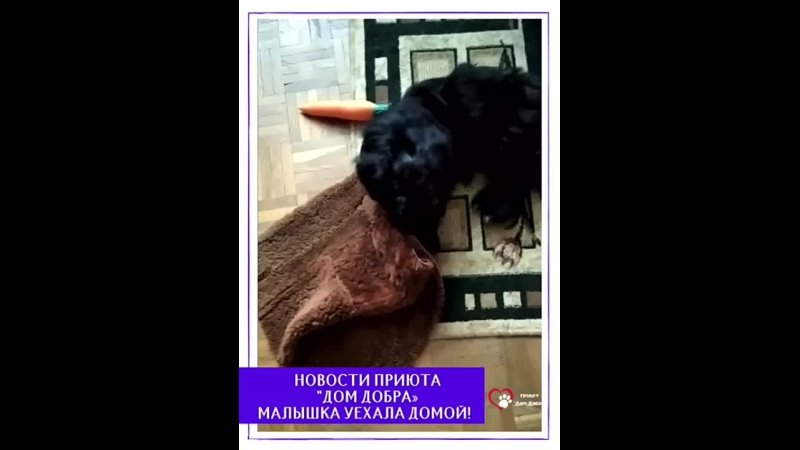 """Видео от Приют для собак Дом добра"""" в г Вязьма"""