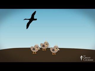 21-Ethology Studying Animal Behavior