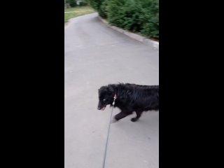 Video by Группа Михалыча и  животных, попавших в беду