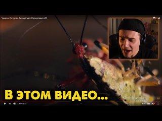 [Roma Subbotin] Ужасы Острова Гигантских Насекомых 2 | Звездный Капитан | Страшные Видео на Ночь | Реакция